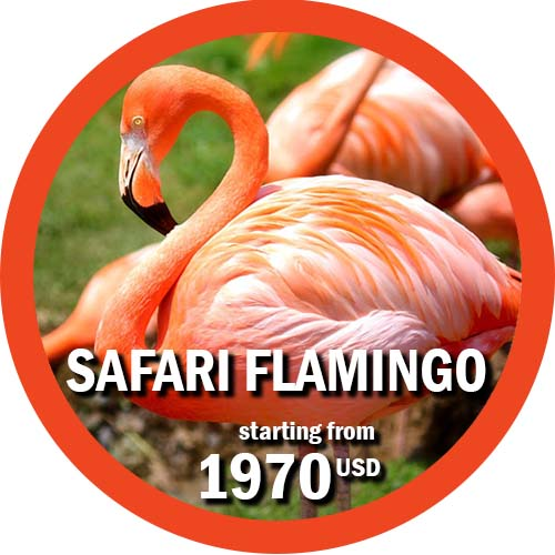 8 days safari in tanzania Flamingo
