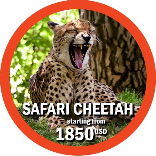 Cheetah Safari 7-day itinerary in Tanzania