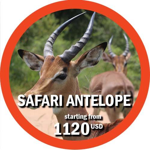 Safari Antelope 4 Days itinerary in Tanzania