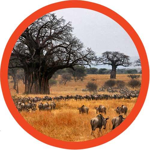 Safari in Tanzania destinazions