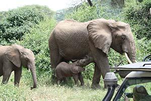 Parco Manyara Viaggio di lusso Africa