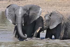 Parco del Tarangire Safari Culture