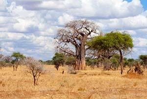 Parco del Tarangire safari di lusso tanzania