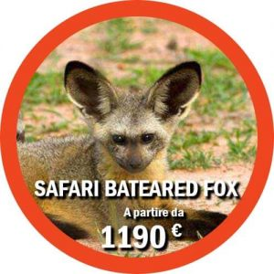 Itinerario Safari Ruaha Bat