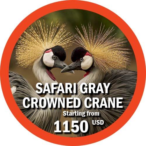 Safari Gray Crowned Crane