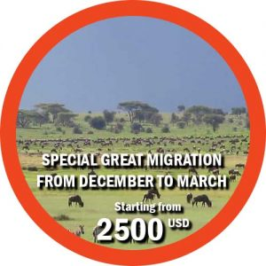 Special Great Migration from December to March