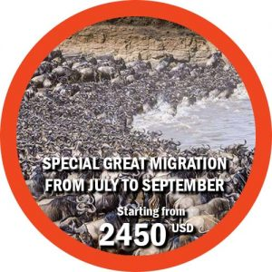Special Great Migration from july to september