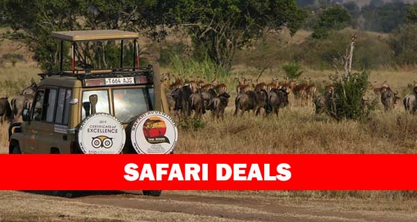 Safari deals Tanzania