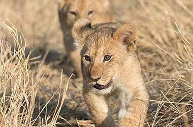 Animali parco del Serengeti