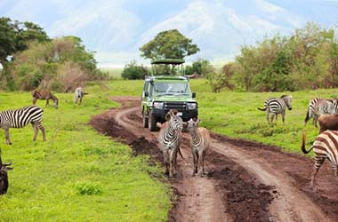 From Serengeti to Ngorongoro