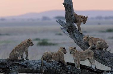 Grande migration vers le parc du Serengeti