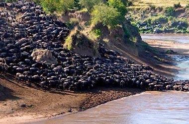 Parc du Nord Serengeti