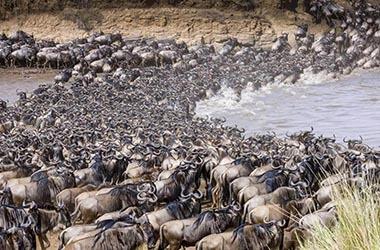 Parco del Serengeti migrazione