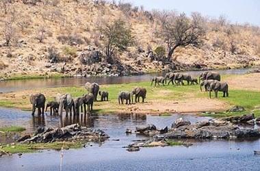 Safari Parco del Ruaha