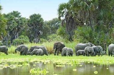 Selous Park nature walk