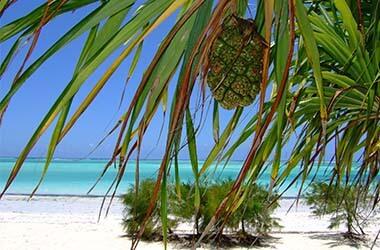 Vacanza Zanzibar