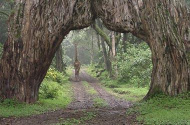 Visitez le parc d'Arusha