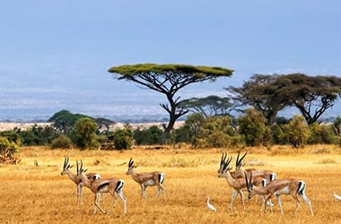Visitez le parc national du Serengeti
