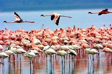 Visitez le parc national du lac Manyara