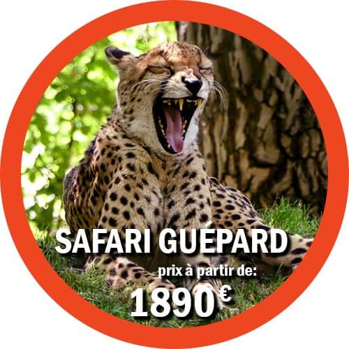guépard Safari de 7 jours en Tanzanie