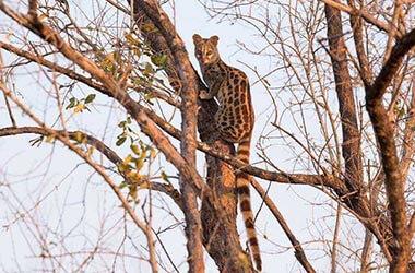 photo safari Ruaha