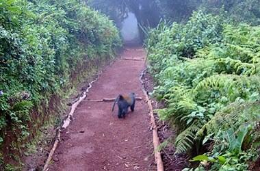 Discesa Marangu Gate