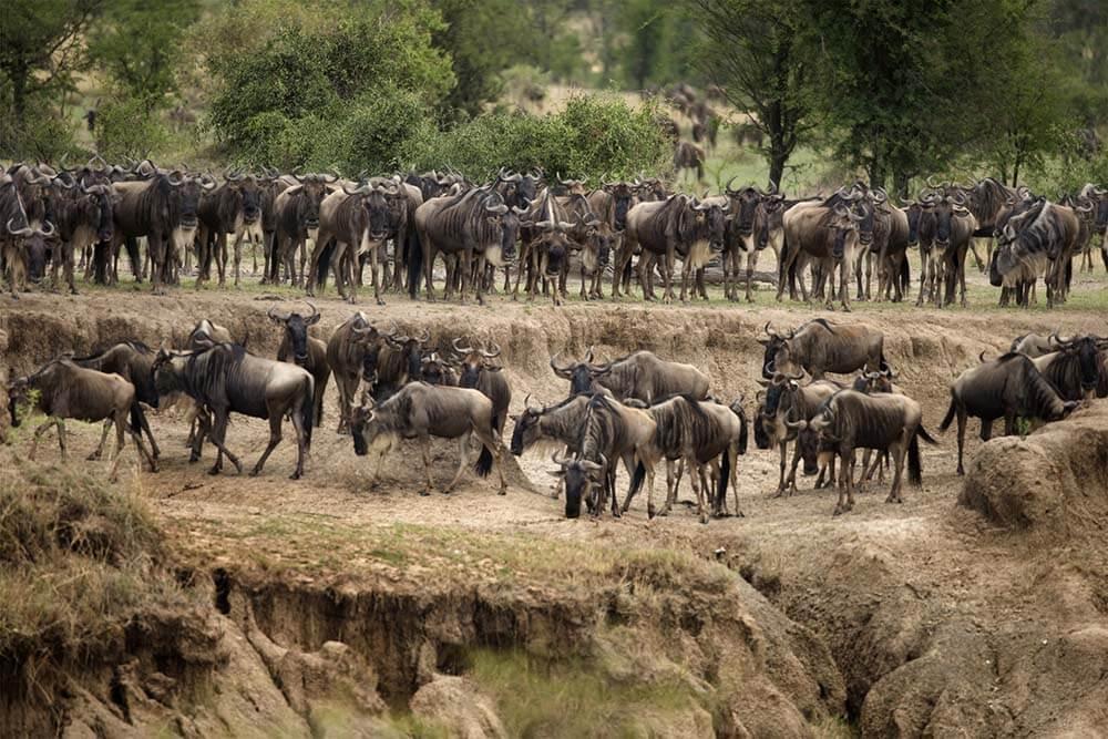 Grande Migrazione Serengeti