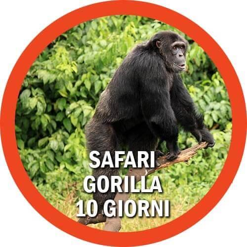 Safari Gorilla Uganda
