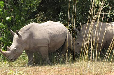 Ziwa Rhino Ranch