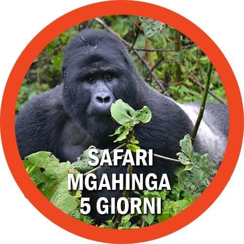 safari Mgahinga