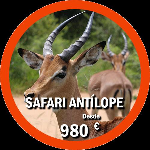 Safari Antílope
