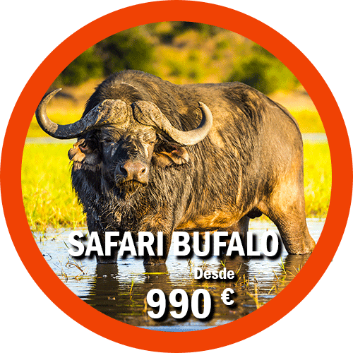 Safari Bufalo