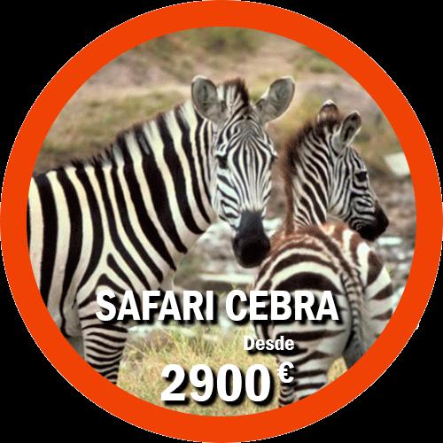 Safari Cebra