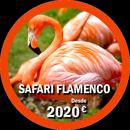 Safari Flamenco