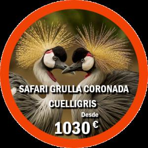 Safari Grulla coronada cuelligris