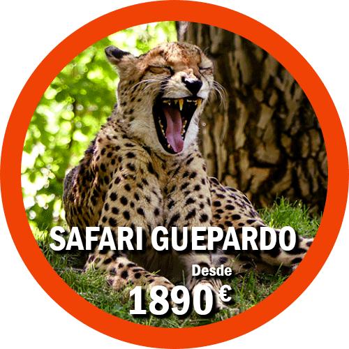 Safari Guepardo