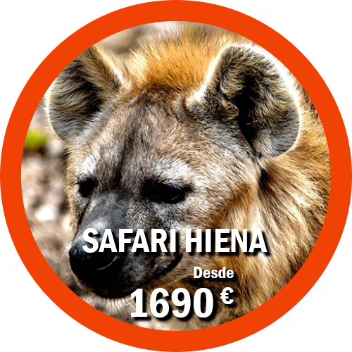 Safari Hiena