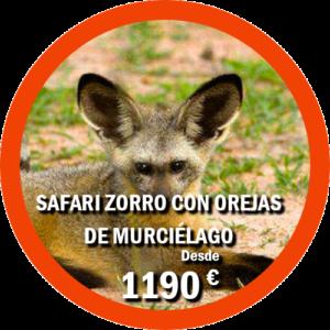 Safari zorro con orejas